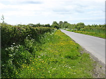 NY2460 : The lane from Glasson to Kirkbride by David Purchase