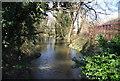 TQ5571 : River Darent by N Chadwick