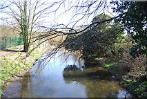 TQ5571 : River Darent by N Chadwick