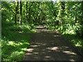 SU8974 : Hogoak Lane by Alan Hunt
