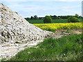 TM4294 : Lime fertiliser in oilseed rape field, Toft Monks by Evelyn Simak