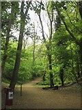 TQ3870 : Green Chain Walk, Ravensbourne by Derek Harper