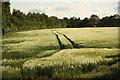 SK9471 : Barley field by Richard Croft