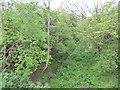 NU0813 : Cornhill Branch by Richard Webb