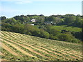SW6228 : Field of recently cut silage at Roseladden by Rod Allday