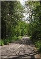 TQ0665 : Road from Hamm Court Estate by Derek Harper