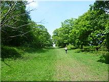 TQ5244 : Avenue of trees in Penshurst Park by Marathon