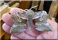 TL2601 : Poplar Hawk Moth (Laothoe populi) by Rob Farrow