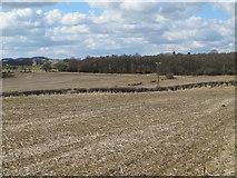 NZ0366 : Farmland southeast of Greenleighton and Black Plantation by Mike Quinn