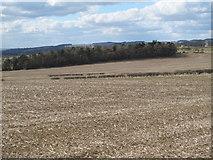 NZ0366 : Farmland south of Black Plantation by Mike Quinn