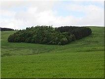 NU0013 : Thieves Road Plantation by Richard Webb