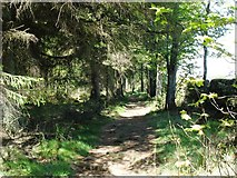 NY9769 : The Hadrian's Wall Path in Stanley Plantation by David Purchase