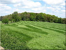NY9070 : Fields and woods on Graydon Hill by David Purchase