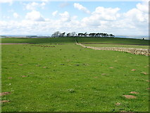 NY8671 : Fields on Teppermore Hill by David Purchase
