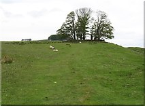 NY8170 : The site of Milecastle 34 by David Purchase