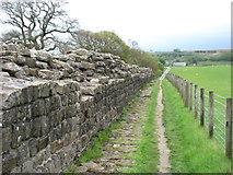 NY6266 : Hadrian's Wall near Willowford by David Purchase