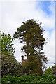 TQ7535 : Monkey Puzzle Tree, Glassenbury Road by Julian P Guffogg
