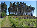 SU8565 : Wagbullock Hill redoubt by Alan Hunt