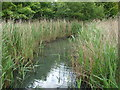 TQ2276 : View of a meandering stream in the London Wetlands Centre #3 by Robert Lamb