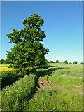 SO7729 : Footpath to Brierley Farm by Jonathan Billinger