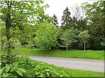 NU0702 : Woodland, Cragside by Richard Webb
