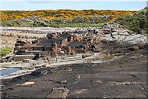 NJ1570 : Sandstone Surface by Anne Burgess
