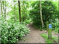 SK5952 : Wheelchair accessible route, Blidworth Woods by Christine Johnstone