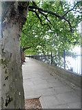 TQ2977 : The Thames Path alongside Grosvenor Road by Row17