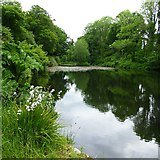 S9157 : The lake at Newtownbarry House by Charlie Doolally