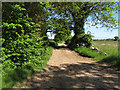 TM4686 : Track off Jay's Hill Road, Sotterley by Roger Jones