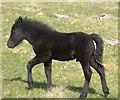 SX5488 : Foal, Coombe Down by Derek Harper