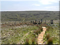 SD9912 : Pennine Way Approaching Marsden Moor by David Dixon