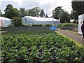 NT5434 : Borders Book Festival and the kitchen garden by Jim Barton