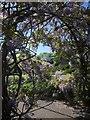SX9265 : Wisteria, Tessier Gardens by Derek Harper