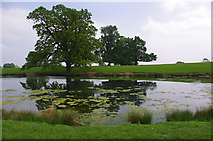NZ1221 : Low Pond, Raby Park by Ian Taylor