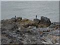 SX9463 : Hope's Nose, fishermen by Alan Hunt
