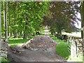 NY7162 : Track through Sunny Plantation by Oliver Dixon