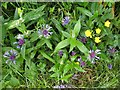 H6372 : Wild plants, Aghagalon by Kenneth  Allen