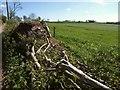 ST2703 : Laid hedge and field near Furley Cross by Derek Harper