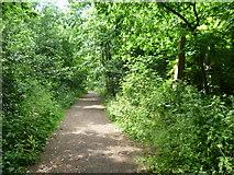 TQ3386 : Path in Abney Park Cemetery by Marathon