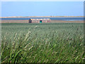 NU0840 : Wheat field near Fenham by Graham Robson