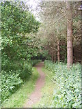 TM4579 : Footpath to the A12 London Road by Adrian Cable