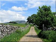 SD8172 : Ascending Horton Scar Lane by Chris Heaton