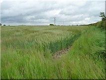 SE8456 : Southern boundary of a barley field by Christine Johnstone