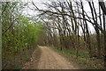 TQ7068 : Track along the edge of Broad Oak Wood by N Chadwick