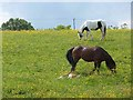 NZ1064 : Horses and foal by Oliver Dixon