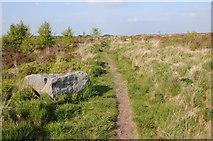 SE2065 : Path on Brimham Moor by Philip Halling