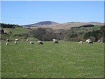 NU0122 : Sheep pasture by Richard Webb