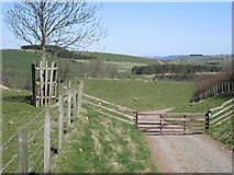 NU0122 : Old Wooler to Ingram road by Richard Webb