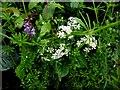 H4868 : Wildflowers, Camowen by Kenneth  Allen